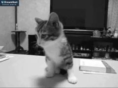 Venta online de Regalos y Objetos de Diseño en Nobrand